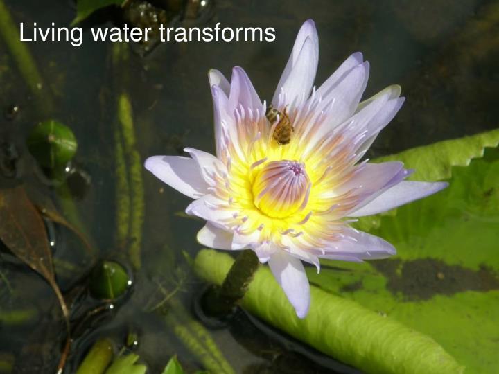 Living water transforms