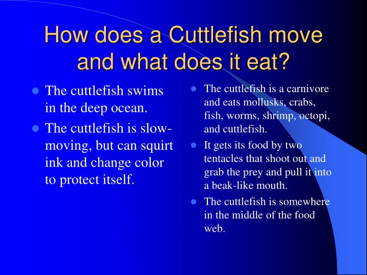 The cuttlefish swims in the deep ocean.
