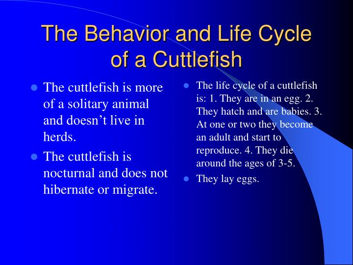 The cuttlefish is more of a solitary animal and doesn't live in herds.