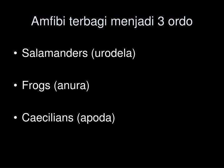 Amfibi terbagi menjadi 3 ordo