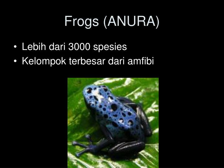 Frogs (ANURA)