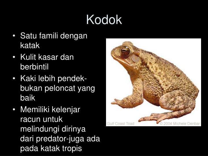 Satu famili dengan katak