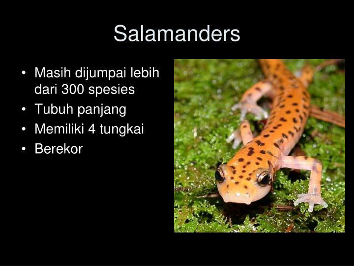 Masih dijumpai lebih dari 300 spesies