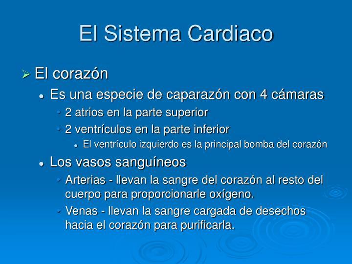 El Sistema Cardiaco