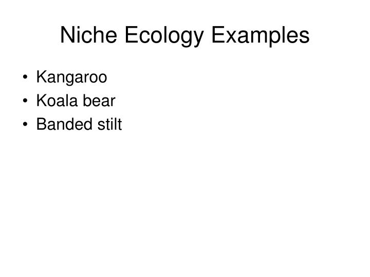 Niche Ecology Examples