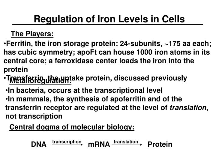 Regulation of Iron Levels in Cells