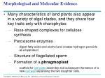 morphological and molecular evidence