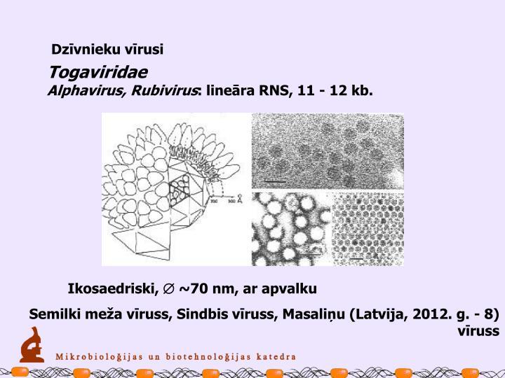 Dzīvnieku vīrusi