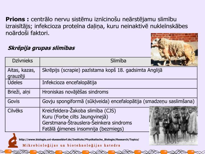 http://www.biologie.uni-duesseldorf.de/Institute/Physikalische_Biologie/Research/Topics/