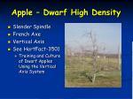 apple dwarf high density