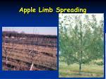apple limb spreading
