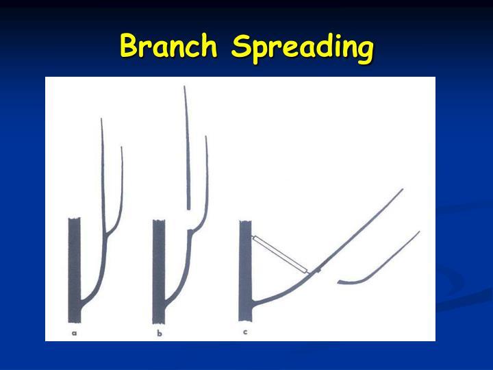 Branch Spreading