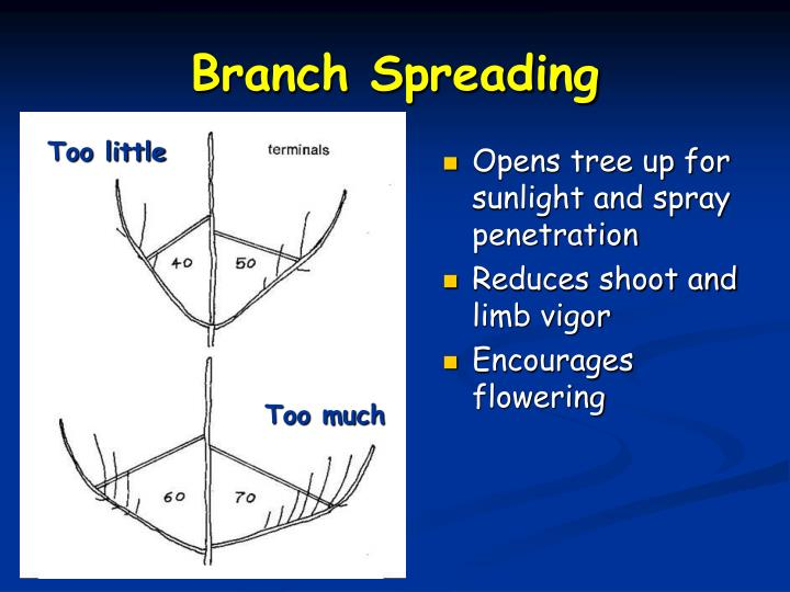 Opens tree up for sunlight and spray penetration