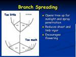 branch spreading1