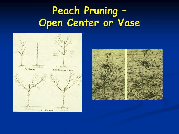 Peach Pruning –
