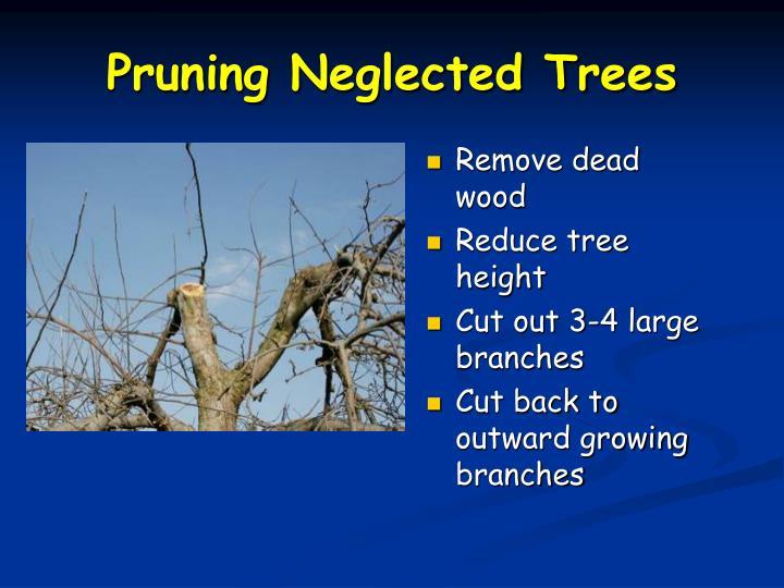 Remove dead wood