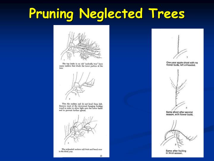 Pruning Neglected Trees