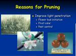 reasons for pruning1