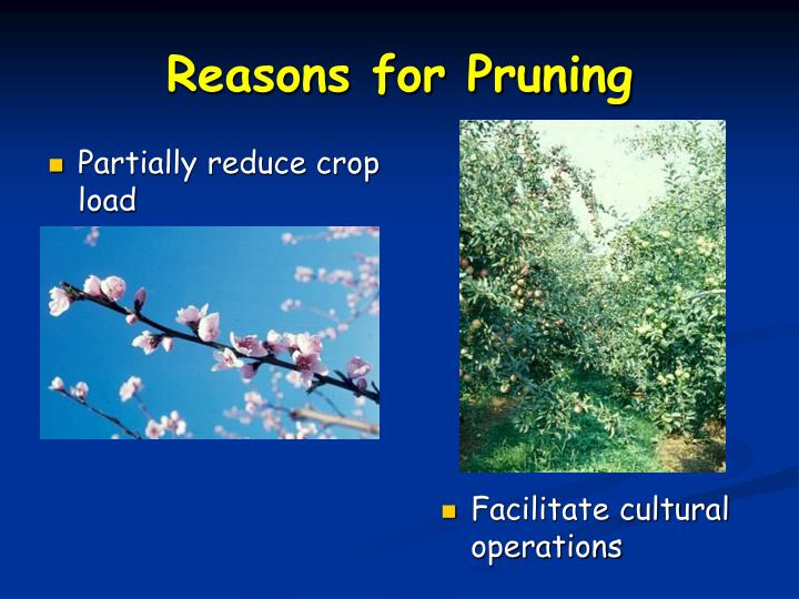 Partially reduce crop load