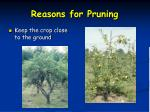 reasons for pruning4