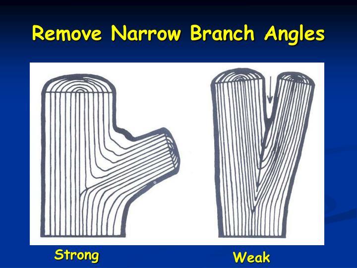 Remove Narrow Branch Angles