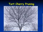 tart cherry pruning2