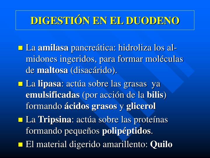 DIGESTIÓN EN EL DUODENO