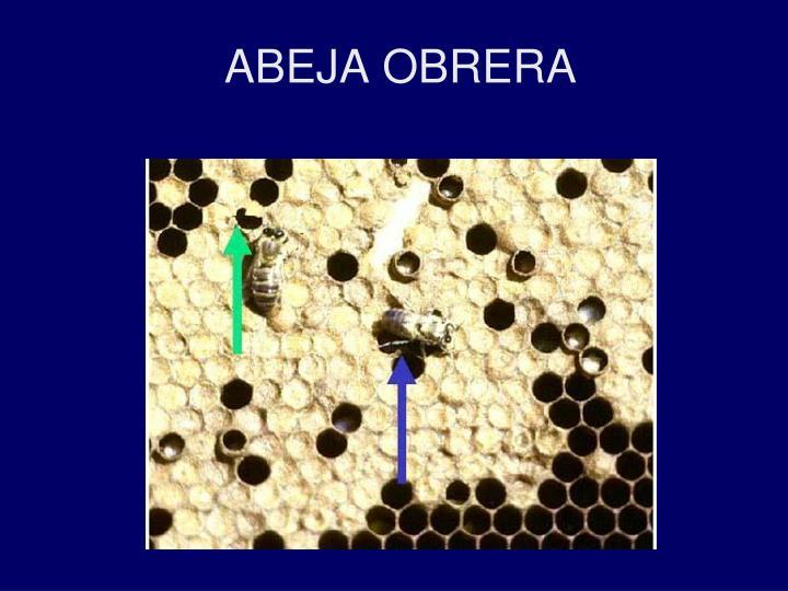 ABEJA OBRERA