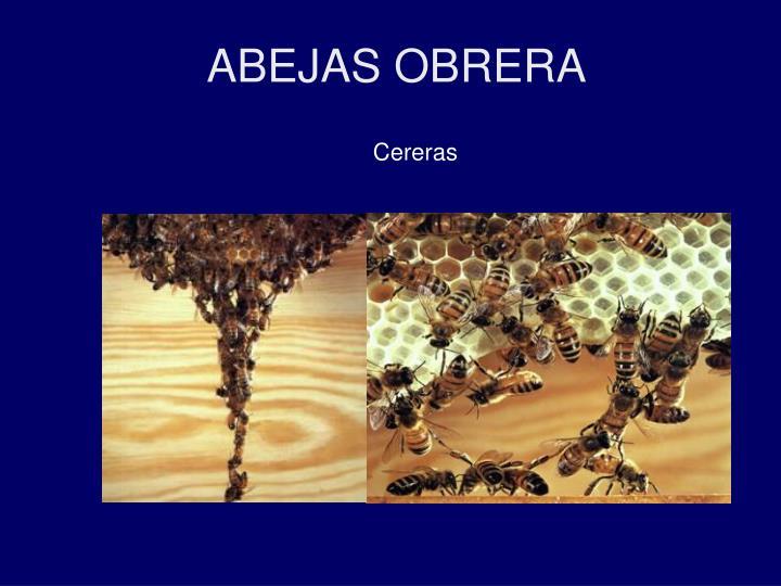 ABEJAS OBRERA