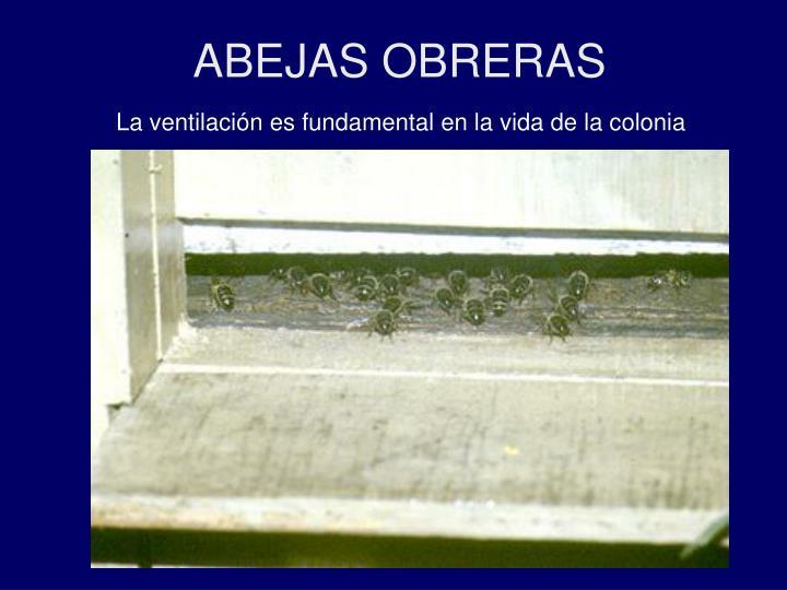 ABEJAS OBRERAS