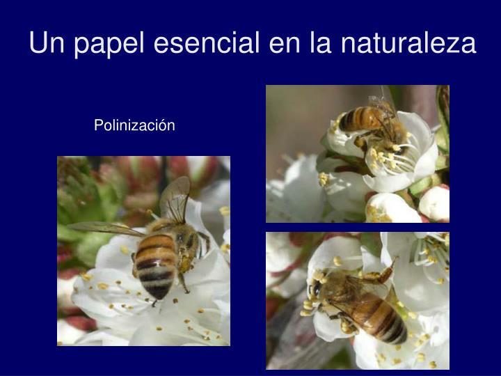 Un papel esencial en la naturaleza