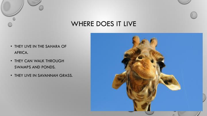 Where does it live