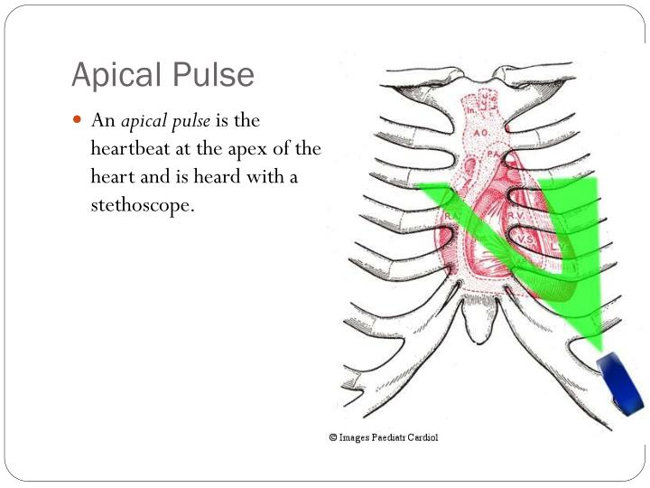 how to take vital signs powerpoint