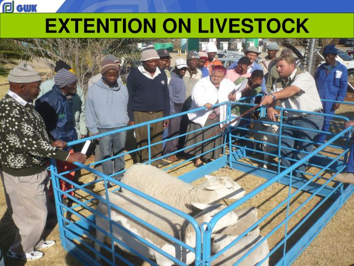 EXTENTION ON LIVESTOCK