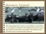 mutualism tickbirds