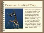 parasitism beneficial wasps