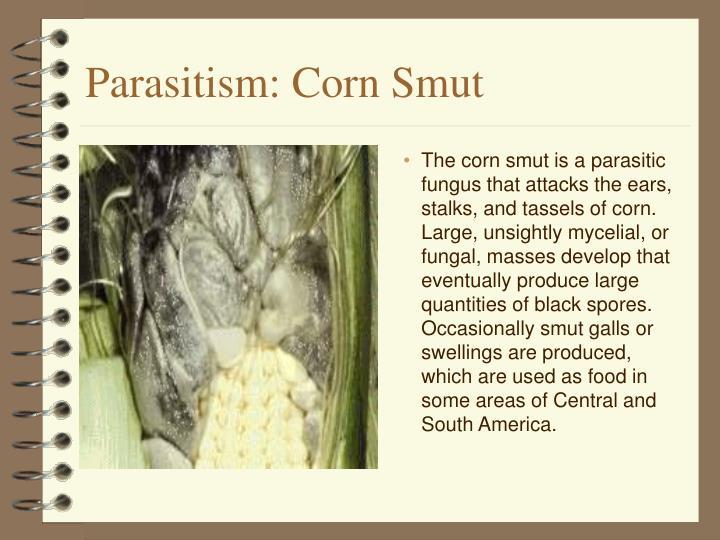 Parasitism: Corn Smut