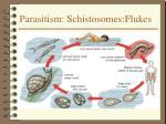 parasitism schistosomes flukes
