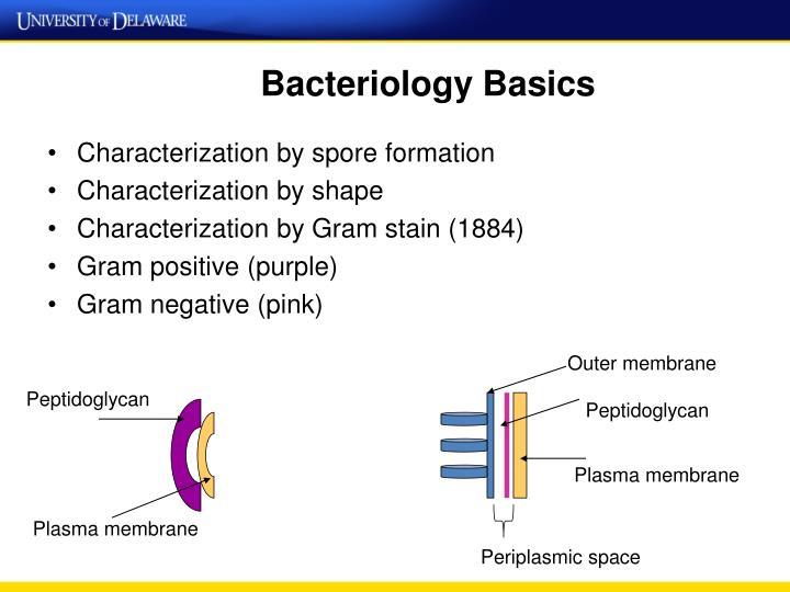 Bacteriology Basics