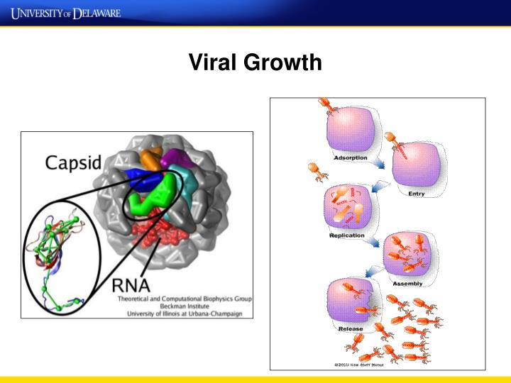 Viral Growth