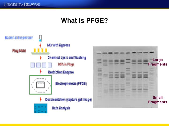What is PFGE?