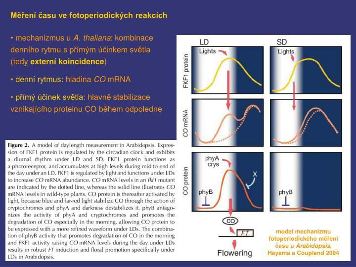 Měření času ve fotoperiodických reakcích