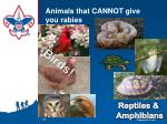 animals that cannot give you rabies