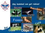 any mammal can get rabies