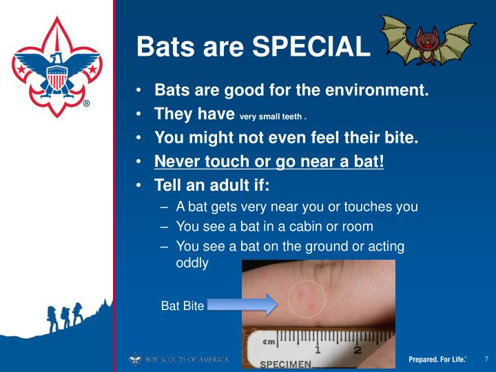 Bats are SPECIAL