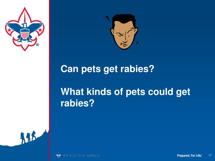 Can pets get rabies?