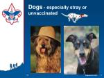 dogs especially stray or unvaccinated