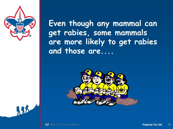 Even though any mammal can get rabies, some mammals are more likely to get rabies and those are....