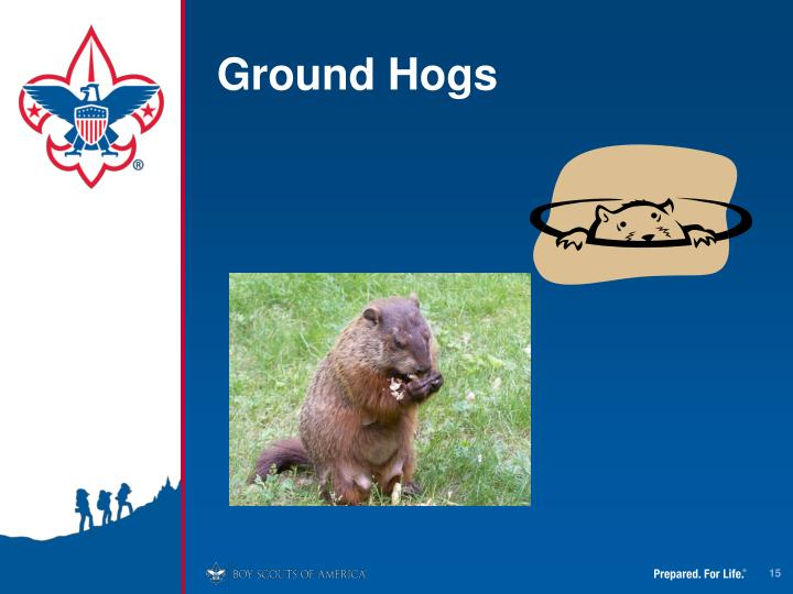 Ground Hogs