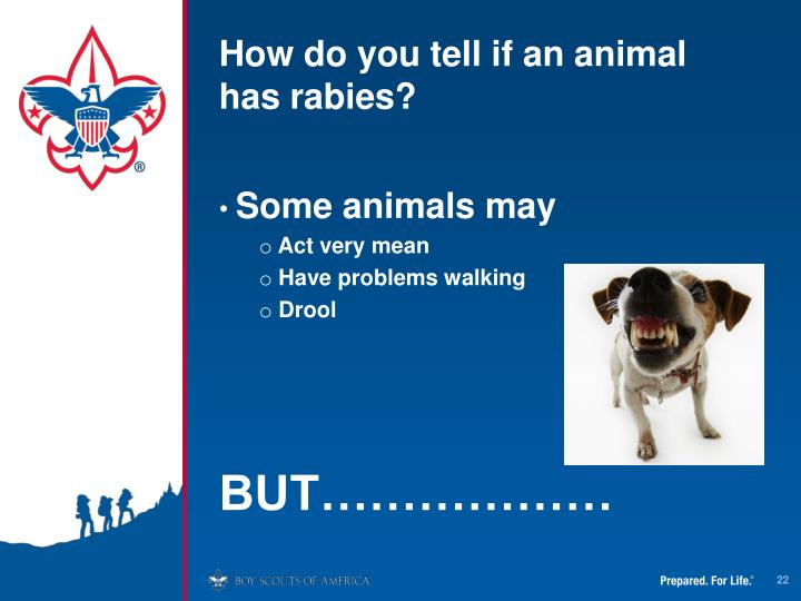 How do you tell if an animal has rabies?